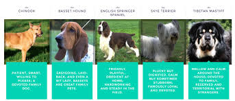 Do Wirehaired Vizslas Shed by Find Out Your Perfect Dog Breed And Enter To Win A 100 Amazon