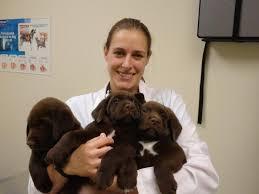 arnett animal hospital dr carrie arnett vca palmetto animal hospital