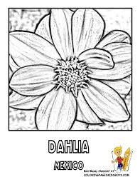 Mexico Dahlia Flower Coloring At YesColoring