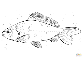 Click The Koi Carp Coloring Pages To View Printable Version Or Color It Online Compatible With IPad And Android Tablets