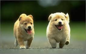 Best Non Shedding Small Dogs by Best Small Breed Dogs For Kids Breed Dogs Picture