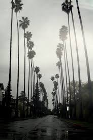 California Tumblr Photography Palm Trees Black And White