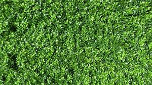 Artifical Green Wall Garden Landscaping Products