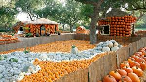 Wheatland Pumpkin Patch by The Ultimate Guide To Budget Friendly Fall Festivities