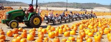 Tapia Brothers Pumpkin Patch by Best Pumpkin Patches In La U2026 Handpicked Just For You U2013 Brits In