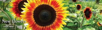 annual flower seeds plants buy grow flowers bulbs burpee