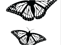 Free Butterfly Coloring Pages Monarch Life Cycle