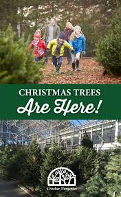 Canaan Fir Christmas Tree Needle Retention by Christmas Trees Are Here