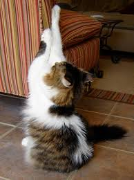How To Keep Cats From Scratching Furniture Apps Directories Keep