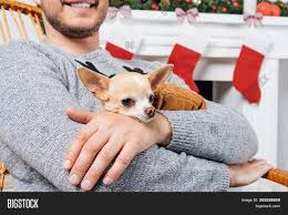🔥 Cropped Shot Of Man In Rocking Chair Holding Little Chihuahua Dog ... These Elder Dogs Are Missing Someone From The Rocking Chair Favogram Puppy Dog In Tadley Hampshire Gumtree On A Stock Photo Download Image Now Istock Vintage Grandpa Man Wdog Pipe Rocking Chair Tirement Fund Bank Taking Akc Trick To The Next Level Top Notch Toys Miniature Schnauzer Wooden Lessons From Part Two Mothering Spirit Whats A Good Rocking Chair Quora Hd Welcome Are Love Puppies Lovers