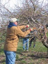 Best Pumpkin Patches Indianapolis by Caring For Home Apple And Fruit Trees Tuttle Orchards Inc