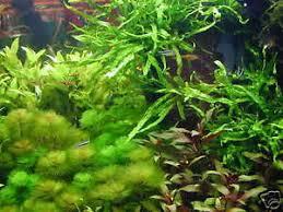 1 lot de 30 brins de plante pour aquarium made in ebay