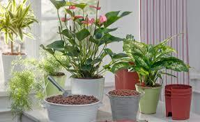 hydrokulturpflanzen diese 11 arten eignen sich am besten