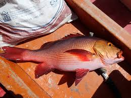 Next On The Tour A Brief Sortie To Salt Ponds For Hawaiian Ladyfish And Mozambique Tilapia Most Visiting Anglers Dont Fish In These