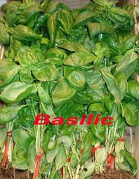 cuisiner le basilic dictionnaire de cuisine et gastronomie basilic
