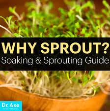 Sprouted Pumpkin Seeds Phytic Acid by Sprout Guide How To Sprout Grains Nuts U0026 Beans Lifespacehealing