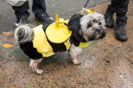 Tompkins Square Halloween Dog Parade by Look At These Adorable Puppies From The Tompkins Square Halloween
