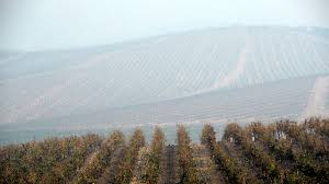 Napa Pumpkin Patch by California Fires Shake Winery Owners