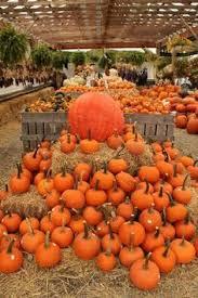 Santa Clarita Pumpkin Patch Festival by Pumpkin Patch And Barn At Faulkner Farm Santa Paula California