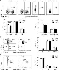 Rbc Tile Stone Of Iowa yy1 regulates the germinal center reaction by inhibiting apoptosis