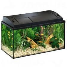 aquarium poisson prix petit aquarium prix