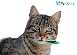 cat dental care pet dentist bamboo charcoal pet cat toothbrush soft