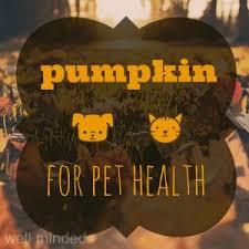 Pumpkin For Pets Diarrhea by 28 Pumpkin For Pets Diarrhea A Natural Cure For Your Pet S