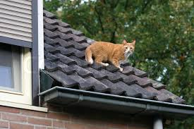 cat on cat on the roof stock photo colourbox