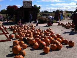 Goebbert Pumpkin Patch In Barrington Il by Feed Giraffes Ride Camels At Goebbert U0027s Pumpkin Farm Barrington