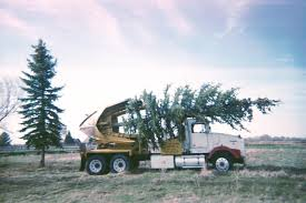 CCI Tree Movers Service Baumalight Nomad Tree Spades 100 For Chase Farms Youtube Cqm Series Pick Up Truck Mounted Hydraulic Trsplantertree Trees By Brady Bennett Winchester Wi Spade And Truckingdepot Premier Equipment Rentals Skidsteer Four More Favorite Northern Virginia Shade Surrounds 60 Bobcat 1991 Gmc Sierra 3500 Pickup Truck With Tree Spade Item Dc0