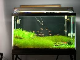 a newbie s 16 gallon nuvo aquarium journals nano reef