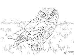 Coloring Pages For Kids Birds Owls Barn Owl Brings A Prey For Its ... White And Brown Barn Owl Free Image Peakpx Sd Falconry Barn Owl Box Tips Encouraging Owls To Nest Habitat Diet Reproduction Reptile Park Centre Stock Photos Images Alamy Bird Of Prey Tyto Alba Video Footage Videoblocks Barn Owl Tyto A Heart Shaped Face Buff Back Wings Bisham Group Bird Of Prey Clipart Pencil In Color British Struggle Adapt Modern Life Birdguides Beautiful Owls Pulborough Brooks The