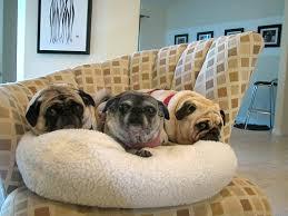 Benjamin Henry Luna In Their New Bean Bag Dog Bed