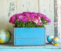 Painted Periwinkle Blue A Fruit Crate Can Tote Glass Jars Holding Bouquets Of Freshly Cut Sweet William Deep Vintage With Reinforce Seams