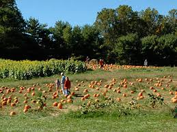 Great Pumpkin Patch Frederick Md by Mapping 20 Pumpkin Patches Nearest Washington D C Larriland Farms
