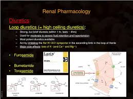 High Ceiling Diuretics Ppt by Ppt Renal Pharmacology Powerpoint Presentation Id 846665