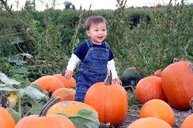 Kent Island Pumpkin Patch by 2013 Sw Florida Pumpkin Patches Fall Festivals Haunted Houses