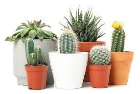 25 pflanzen für das wohnzimmer tolle einrichtungsideen