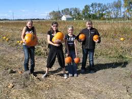 Fargo Pumpkin Patch by Gene U0027s Pumpkin Patch Edgeley Nd