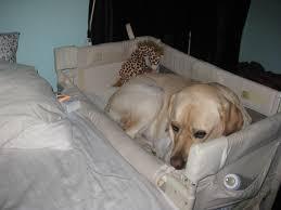 Serta Dog Beds by Wonderful Kirkland Dog Bed Costco Kirkland Dog Bed Costco Dog Beds