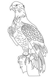 American Eagle Marine Corps Coloring Pages Printable