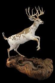 Decorated Cow Skulls Pinterest by 78 Best Taxidermy Images On Pinterest Deer Skulls European