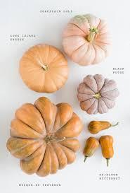Varieties Of Pumpkins by Autumn Inspiration Heirloom Pumpkin Varieties Pumpkin