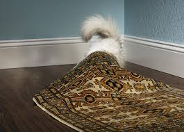 Dog Urine Wood Floors Vinegar by How To Get Rid Of Dog And Cat Urine Odors