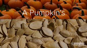Pumpkin Pumpkin By Jeanne Titherington by A Pumpkin U0027s Life Cycle Youtube