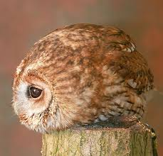 A Ball Of Owl The Website This Comes From Is Like Mecca Cute
