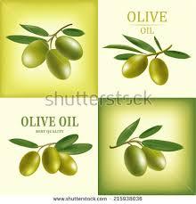 Vector olive oil Decorative olive branch For label pack