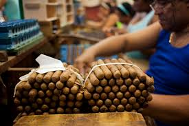 Cigar Production At The Tabacuba Factory In Cuba