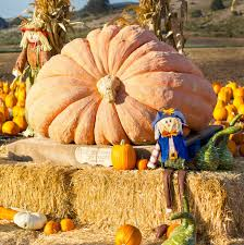 Pumpkin Patch Near Lincoln Il by Nj Fall A Complete Guide To Fall In New Jersey Best Of Nj Nj