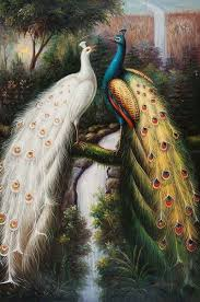Beautiful Peacock Couple Hd Wallpapers